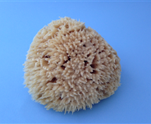 Natural  Seawool Sponge