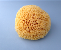 Natures Bath Sea Sponge
